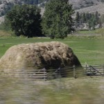 We noticed a number of fields with these hay stacks