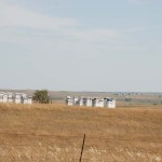 Bee Hives were common in ND