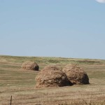 We saw some of these old fashioned looking haystacks here and there.