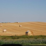 Lots of round bales. The wheat has already been harvested.
