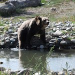 His female companion was always on the move. Here she is testing the water before her swim.