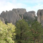 Along Needles Highway