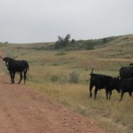 On Buffalo Gap Road
