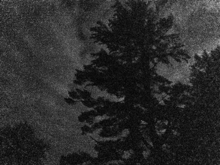 old-pine-full-moon